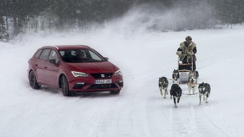 Красивейшее видео с милыми собачками и спортивным автомобилем.
